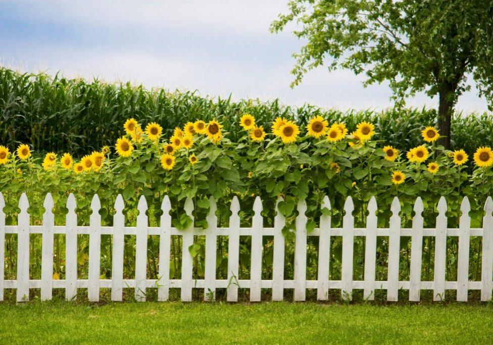 flower overlap the fence